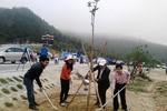 Phát động Tết trồng cây Đời đời nhớ ơn Bác Hồ tại khu mộ Đại tướng