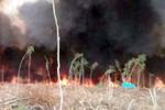Hai công nhân bắt ong làm cháy 12 ha rừng