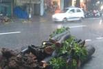 Hà Nội: Mưa lớn, cây đổ gây chết 1 người trên phố Bà Triệu