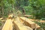 Cấm mua bán trao đổi gỗ rừng tự nhiên dưới mọi hình thức