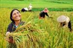 Người nông dân và tư duy lãnh đạo vượt nhiệm kỳ
