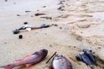 Cá chết bất thường ở biển miền Trung, Thủ tướng yêu cầu xử lý nghiêm