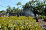Vi phạm về giống cây trồng, bảo vệ thực vật bị phạt tới 100 triệu đồng