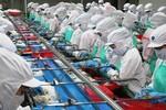 Xem xét khởi tố vụ làm giả 800 giấy tờ kiểm định sản phẩm thủy sản