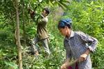 Kiểm soát chặt chẽ việc chuyển mục đích sử dụng đất lâm nghiệp
