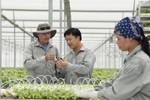 Thu hút doanh nghiệp đầu tư vào nông nghiệp