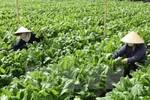 Đầu tư hơn 306 nghìn tỷ đồng tái cơ cấu trồng trọt, chăn nuôi, chống thiên tai