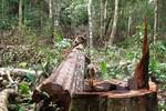 """Chấm dứt tình trạng """"hợp thức hóa"""" quyền sử dụng đất do phá rừng trái luật"""