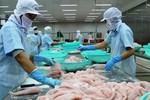 Tìm giải pháp gỡ khó cho cá tra xuất khẩu sang Mỹ