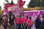 Hàng vạn người dân say mê với vẻ đẹp của Hoa Anh Đào