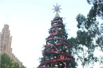 Du học sinh Việt Nam háo hức đón Giáng sinh tại Australia