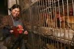 Nguy cơ virus cúm H7N9 lây từ người sang người