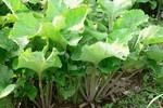 8 loại rau chữa bệnh táo bón hiệu quả
