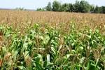 Những cánh đồng bạt ngàn mang về nghìn tỷ cho bầu Đức ở nước ngoài
