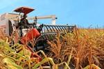 """Xuất ngoại """"nông nghiệp công nghệ cao"""", bầu Đức bỏ túi nghìn tỷ"""