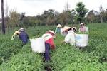 """VietinBank đã """"chi"""" trên 72.000 tỷ cho nông nghiệp nông thôn"""