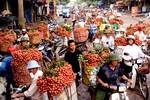 Cao điểm mùa vải, Bắc Giang thu hoạch 2.000 tấn/ngày