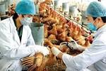 Công điện hỏa tốc của Thủ tướng về phòng chống dịch cúm