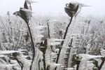 Hà Nội lạnh 8oC, miền Bắc rét đậm, rét hại