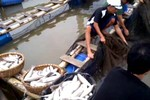 Đã có kết luận nguyên nhân cá lồng chết hàng loạt ở Thanh Hóa