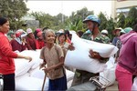 Hỗ trợ gạo cứu đói cho 3 tỉnh