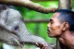 50 bức ảnh động vật đẹp nhất năm 2012 (P1)