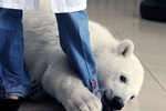 50 bức ảnh động vật đẹp nhất năm 2012 (P2)