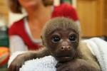 Xem ảnh này còn ai muốn giết voọc, hãm hại khỉ?