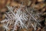 Cận cảnh hoa tuyết và băng trên đường phố nước Nga