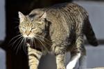 Mèo của Bộ trưởng Tài chính Anh bị nghi là gián điệp cho Trung Quốc