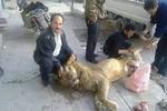 Người Syria xẻ thịt sư tử sở thú ăn chống đói
