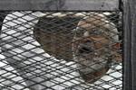 Ai Cập kết án tử hình hơn 700 người ủng hộ cựu Tổng thống Morsi