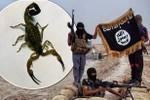 IS dùng bom bọ cạp gây hoảng loạn ở Iraq