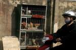Người Hà Nội biến vỉa hè thành chuồng gà để... tăng gia