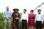 PCT Quốc hội Tòng Thị Phóng đánh giá cao mô hình trang trại bò sữa TH
