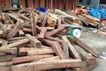 Thương lái Trung Quốc gom hết gỗ trắc ở chợ Đồng Kỵ