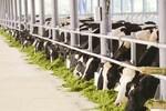 Ngành sữa Việt Nam phát triển vượt bậc
