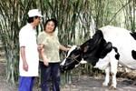 Vinamilk mua gần 20 triệu kg sữa nguyên liệu chỉ trong 1 tháng