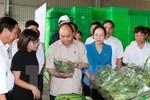 Thủ tướng thăm Dự án sản xuất rau công nghệ cao VinEco Hải Phòng
