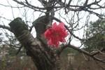 Phố hoa, cây cảnh Hà thành rực rỡ, tấp nập đón Xuân 2013