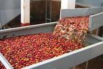 """Giật mình những """"con số đen"""" trong ngành cà phê Việt"""