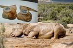 90% sừng tê giác bán tại Việt Nam là sừng trâu