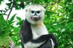 Vingroup công bố Chương trình Bảo tồn động vật Vinpearl Safari