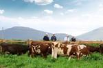 Vinamilk tiên phong xây dựng trang trại bò sữa organic đầu tiên tại Việt Nam