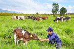 Trang trại bò sữa Vinamilk Lâm Đồng đạt chuẩn Organic Châu Âu