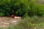 Khởi tố hung thủ sát hại dã man nữ sinh lớp 12 sau khi quan hệ