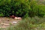 Liên hệ giữa kẻ thủ ác giết nữ sinh lớp 12 với sát thủ Lê Văn Luyện