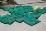 Hà Nội: Bắt xế hộp chở… 56 rắn hổ mang chúa