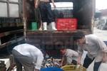Bắt giữ gần 2000 con ếch, cá quả từ Trung Quốc tiêu thụ tại Hà Nội