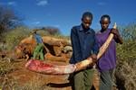 Bức ảnh dùng rìu giết voi lấy ngà gây phẫn nộ